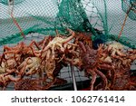 Landscape Picture Of A Crab Po...