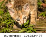 Stock photo kittens in the forest 1062834479