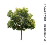 isolated tree on white... | Shutterstock . vector #1062859937
