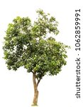 isolated tree on white... | Shutterstock . vector #1062859991