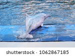 pink dolphin playing on the... | Shutterstock . vector #1062867185