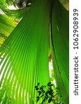 a tropical green rainforest on... | Shutterstock . vector #1062908939