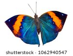 Stock photo colourful butterfly isolated on white background 1062940547