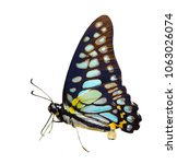 Stock photo a close up of beauty butterfly on white background 1063026074