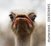 Close Up Animal Portrait Of...