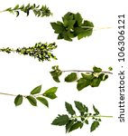 collection tree limbs isolated... | Shutterstock . vector #106306121
