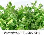 macro image of fresh parsley... | Shutterstock . vector #1063077311