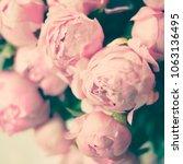 peonies in spring in paris   Shutterstock . vector #1063136495