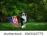 happy border collie carrying... | Shutterstock . vector #1063162775