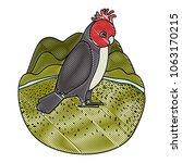 gang gang cockatoo australian...   Shutterstock .eps vector #1063170215