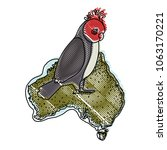 gang gang cockatoo bird over...   Shutterstock .eps vector #1063170221