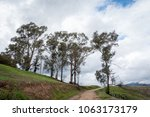 trail between tall trees on a...   Shutterstock . vector #1063173179