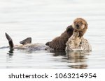 mom and baby sea otters | Shutterstock . vector #1063214954