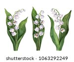 watercolor lily of the valley...   Shutterstock . vector #1063292249