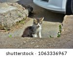 homeless kitten on the street | Shutterstock . vector #1063336967