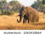 golden light elephant in the...   Shutterstock . vector #1063418864