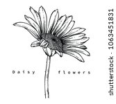 flower drawings.  daisy flowers ... | Shutterstock .eps vector #1063451831