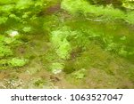 crystal clear water of a river... | Shutterstock . vector #1063527047