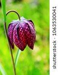 bright spring flowers  ... | Shutterstock . vector #1063530041