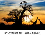 spectacular sunset with baobab... | Shutterstock . vector #106355684