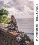 wild monkey sitting on the edge ... | Shutterstock . vector #1063564037