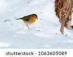 robin  erithacus rubecula .... | Shutterstock . vector #1063605089