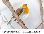 robin  erithacus rubecula ....   Shutterstock . vector #1063605215