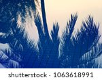 blue silhouettes of palm trees...