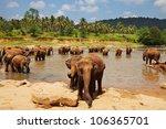Elephant  On Sri Lanka