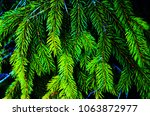 green young fir branches in the ... | Shutterstock . vector #1063872977