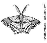 beautiful moth  hand drawing... | Shutterstock .eps vector #1063898594