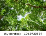 Texture Green Trees Blue Sky