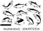 salmon art highly detailed in...   Shutterstock .eps vector #1063972514