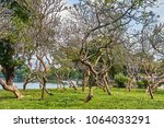 beautiful view from lumpini... | Shutterstock . vector #1064033291