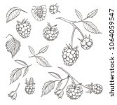hand drawn raspberry set... | Shutterstock .eps vector #1064059547