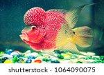 multicolored fish with strange... | Shutterstock . vector #1064090075