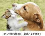 Stock photo  cat hugs the dog puppy and kitten cuddling 1064154557