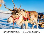 close up of reindeer pulling a... | Shutterstock . vector #1064158049
