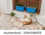 kalkan  kas  turkey   august 13 ... | Shutterstock . vector #1064188055