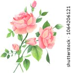 pink watercolor roses isolated... | Shutterstock . vector #1064206121