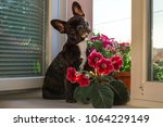 full growth black small  young... | Shutterstock . vector #1064229149