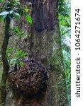 rainforest in australia | Shutterstock . vector #1064271674