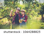young farmer  holding sweet... | Shutterstock . vector #1064288825