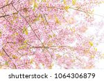 pink blossoms on the branch... | Shutterstock . vector #1064306879