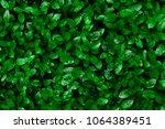 beautiful background of green... | Shutterstock . vector #1064389451