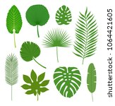 set of tropical leaves isolated ... | Shutterstock .eps vector #1064421605