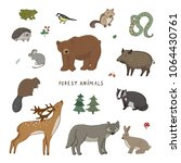 cute woodland forest animals... | Shutterstock .eps vector #1064430761