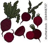 beet colored illustration ... | Shutterstock .eps vector #1064448737