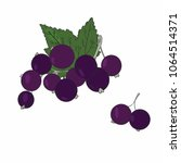 black currants isolated on white   Shutterstock .eps vector #1064514371