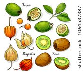 set of vector fruits  feijoa ... | Shutterstock .eps vector #1064537387